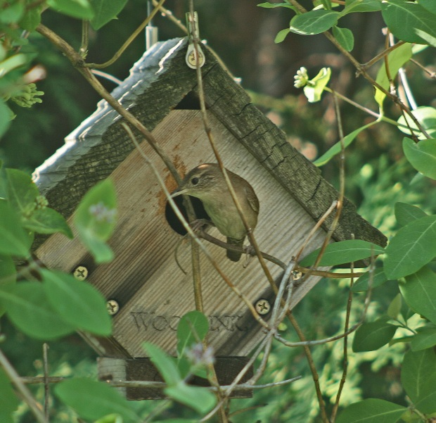 hanging wren birdhouse plans